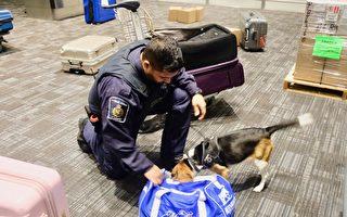 入境加拿大 留學生要注意哪些違禁物品?