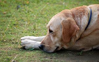 主人被逮捕 阿根廷忠狗在警察局外苦等一年