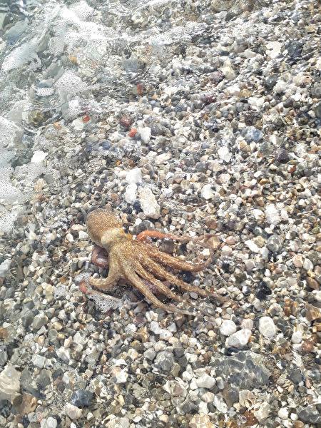 科學家估計章魚的智力水平至少和狗相同。(Valq/Shutterstock)