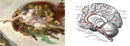 米開朗琪羅《創世記·創造亞當》與大腦結構對照圖。(公有領域/大紀元合成)