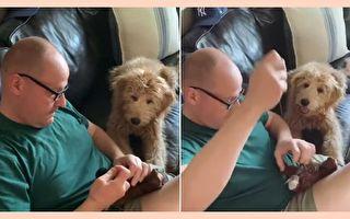 老爹给绒娃娃动手术 狗狗忧心陪伴视频爆红