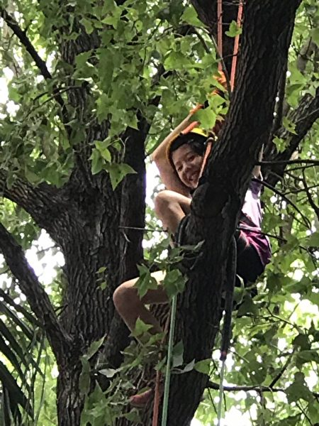 小朋友圆了攀树的梦笑开怀。