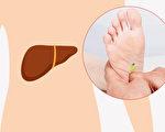 通過腳底按摩可以改善肝功能。(Shutterstock/大紀元製圖)