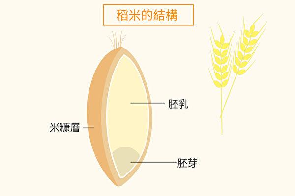 稻穀粒由稻殼、米糠層、胚乳和胚芽組成。(Shutterstock/大紀元製圖)