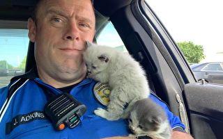 """奶猫获救立即""""抱紧""""警官 让他有了新主意"""