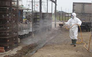 禽流感疫情頻傳 籲請業者強化禽場生物安全