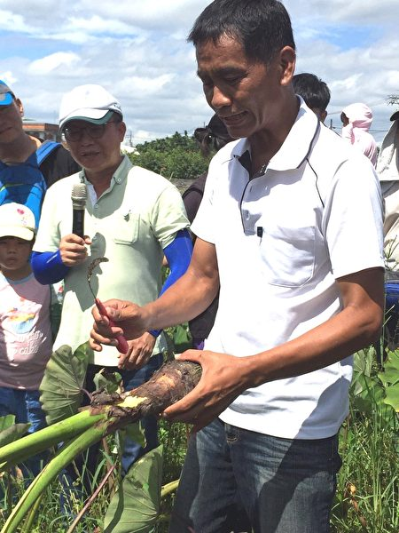 屏東第一位種植產銷履歷芋頭農友簡瑋良,帶領遊客體驗芋頭種植、採收等過程。