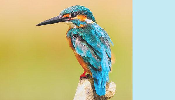 鳥。(公有領域)