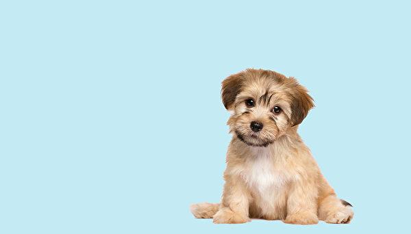 小狗。(Dorottya Mathe/Shutterstock)