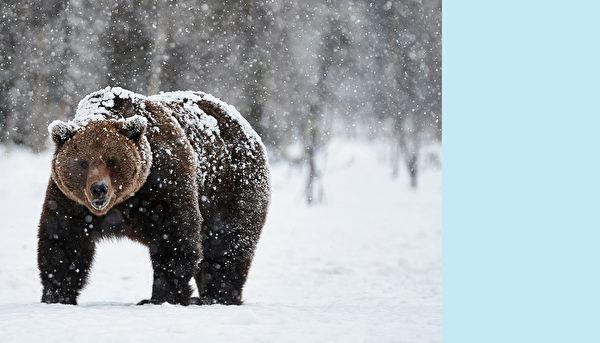 熊。(ArCaLu /Shutterstock)