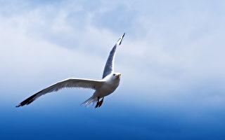 英國小狗遭海鷗叼走 靈媒:牠還活著