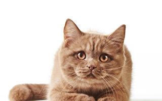 日本便利店店长周年忌日 小猫堵门不愿离去