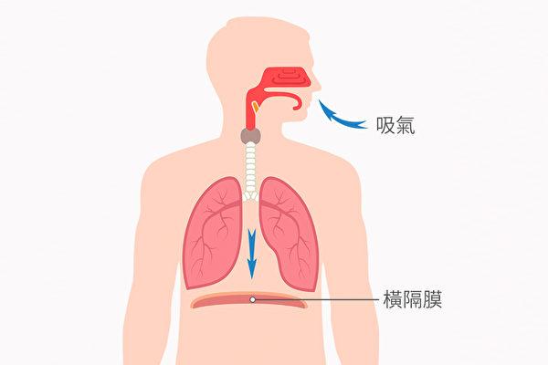 腹式呼吸能夠運動到最大塊的呼吸肌群——橫膈膜。(Shutterstock)