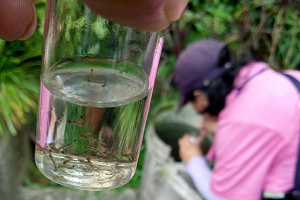 雨后如何清除蚊子孳生源,预防登革热?(屏东县政府卫生局提供)