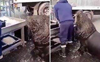 海狮和鱼市工人的有趣互动吸引了摄像者在旁观看,温馨一幕全被录入镜头。(Reddit:Tylers_Twin授权视频截图)