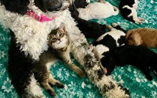 狗媽媽與牠的貓咪寶寶娜拉。(Courtesy of Jamie Myers)