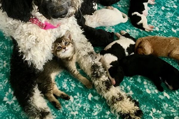 狗妈妈与它的猫咪宝宝娜拉。(Courtesy of Jamie Myers)