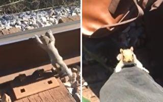 松鼠宝宝受困铁轨 紧抱路人的腿终于脱困