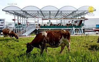荷蘭打造全球首座「海上」牧場