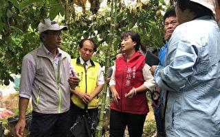 連日豪雨農損冠全台 南投列現金救助縣市