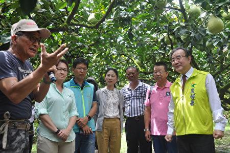 去年文旦评鉴冠军的农友陈金河(左1)说,今年剧烈气候变化,文旦产量比去年减少15%。右1为农粮署长胡忠一。