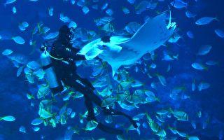 巨型魔鬼鱼求潜水员除鱼钩 获救后流连示谢