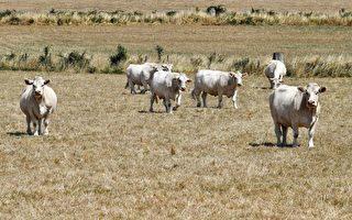 法國大規模乾旱 83個省受限水措施影響