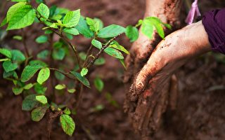 一天种3.5亿棵树 衣索比亚可望破世界纪录