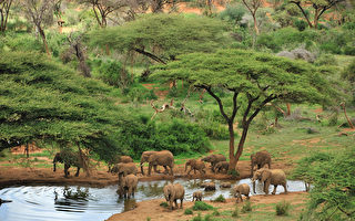 勇闯野性非洲 动物大迁移壮阔奇景