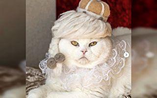 貓咪脫毛變身「毛氈帽」 貓毛紛飛主人不再愁