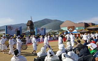 億朵花海美景 韓國巨濟島花卉慶典即將登場