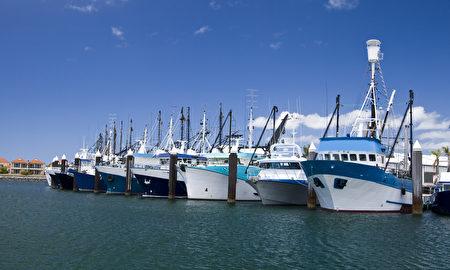"""澳洲林肯港的疯鲔鱼节,便能品尝产地直送的餐点与世界上最新鲜的海鲜外,并观赏闻名世界的""""鲔鱼投掷竞赛""""。"""