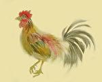 人生感悟:话鸡 画鸡