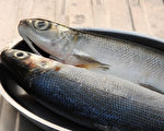 虱目魚含豐富的蛋白質、好脂肪等養分,而且全身是寶。(Shutterstock)