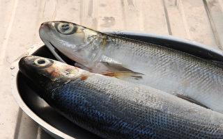 虱目鱼含丰富的蛋白质、好脂肪等养分,而且全身是宝。(Shutterstock)