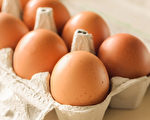 如何挑選品質好又新鮮的雞蛋?(Shutterstock)