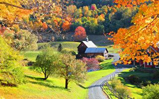 秋季開始 多倫多天氣溫和 賞楓好時節