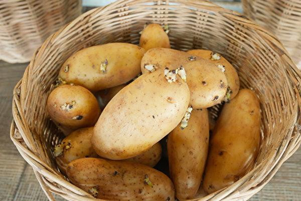 發芽的馬鈴薯別吃,其中含有毒的龍葵鹼(茄鹼),煮熟也不能去除。(Shutterstock)