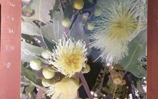 李寶鈺繪畫展 結合音樂 攝影 運動多元素展出