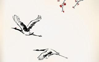 拥抱白鹤的神童──林杰