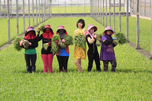 人美心也美 长荣空姐爱心年历推广台湾水果