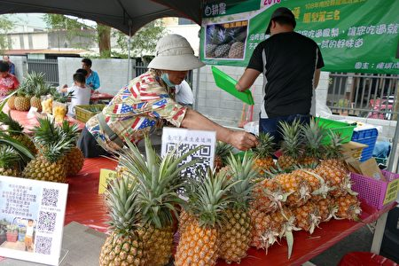 产量全国第一的名间凤梨。