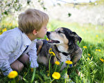 俄9岁男童替宠物作画 换物资捐动物收容所