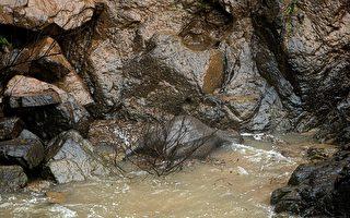 泰国小象掉落瀑布里 5头大象为救它丧命