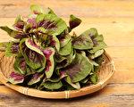 哪些补铁食物含铁量高、易吸收?如何高效补铁?(Shutterstock)