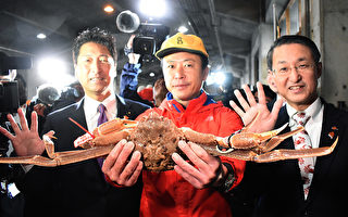 日本雪蟹拍出4.6萬美元高價 再創紀錄
