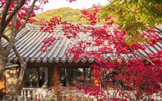 组图:韩国京畿道和谈林 金秋浪漫枫红