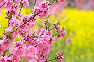 【命理篇】女命带桃花红艳煞 被误解上千年