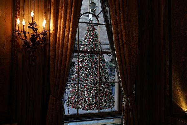 聖誕季將至 如何選聖誕樹?何時買最划算?
