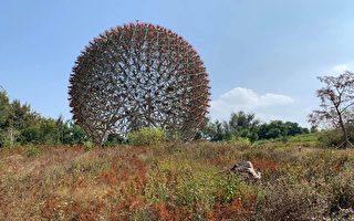 努力化為烏有?花博策展人:國寶植物被剷除